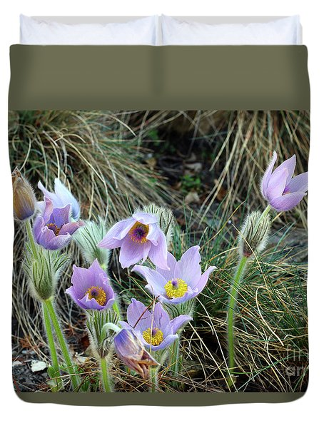 Duvet Cover featuring the photograph Pasqueflower by Michal Boubin