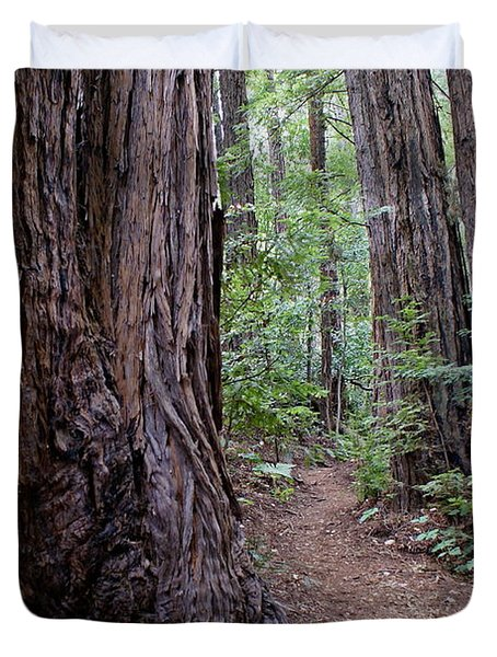 Pathway Through A Redwood Forest On Mt Tamalpais Duvet Cover