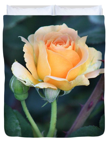 Peach Rose 3 Duvet Cover
