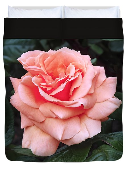 Peach Rose Duvet Cover by Rona Black