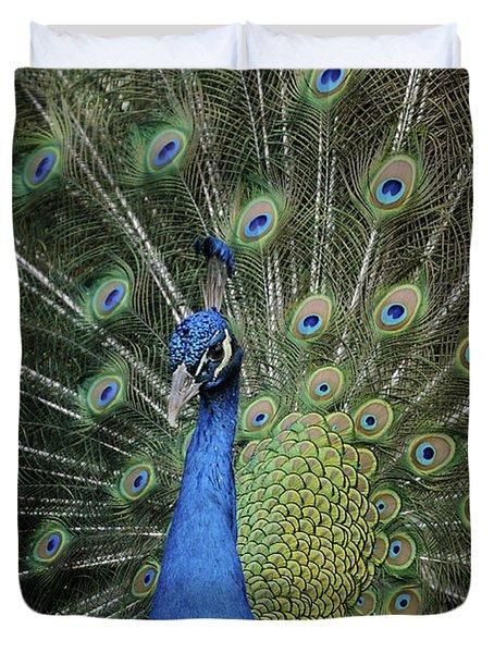 Peacock Displaying Closeup Duvet Cover