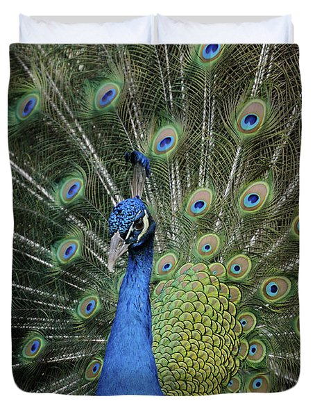 Peacock Displaying Closeup Duvet Cover by Bradford Martin