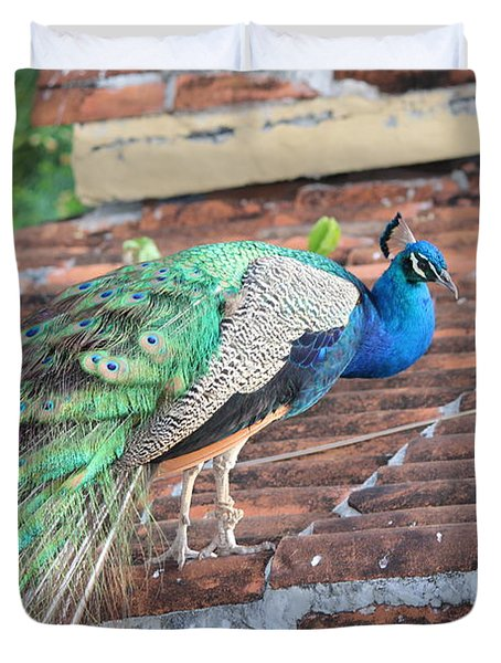 Peacock On Rooftop Duvet Cover