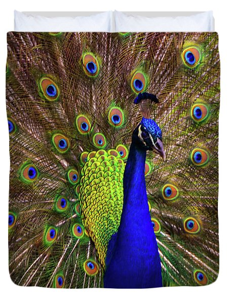 Peacock Showing Breeding Plumage In Jupiter, Florida Duvet Cover
