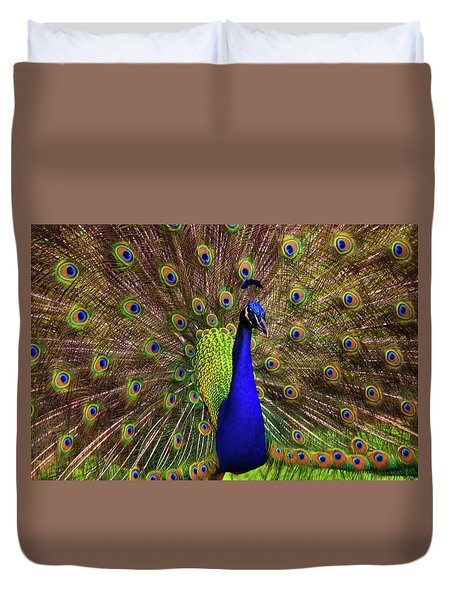 Duvet Cover featuring the photograph Peacock Showing Breeding Plumage In Jupiter, Florida by Justin Kelefas