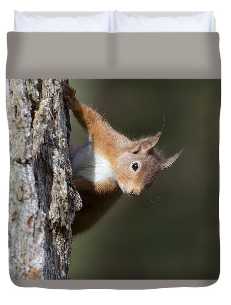 Peekaboo - Red Squirrel #29 Duvet Cover
