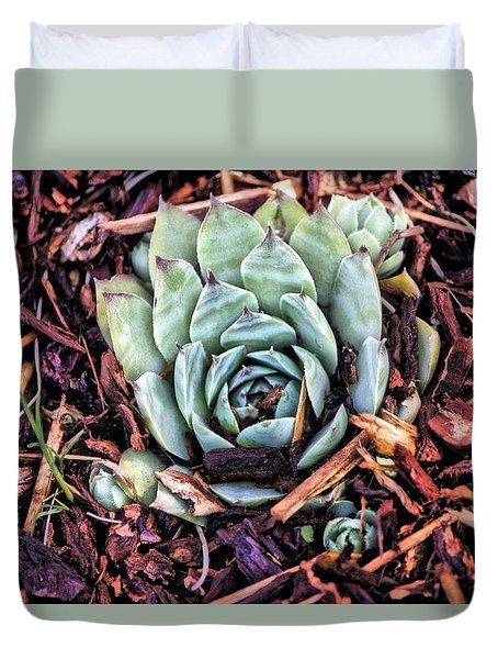 Peekaboo Succulent Duvet Cover by Bonnie Bruno