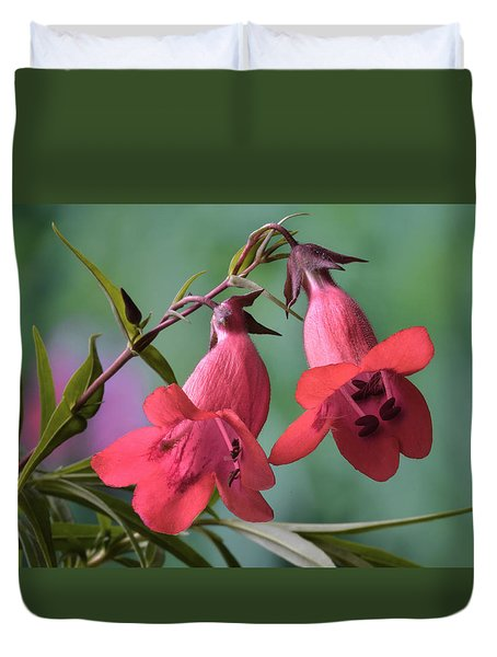 Penstemon Duvet Cover