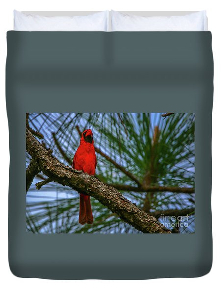 Duvet Cover featuring the photograph Perched Cardinal by Tom Claud