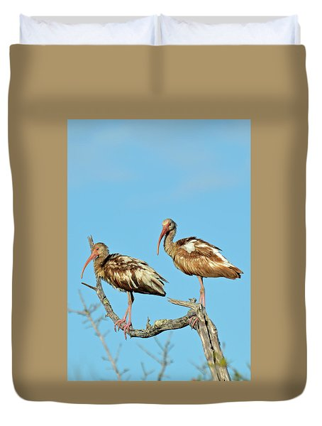 Perched White Ibises Duvet Cover by Bruce Gourley