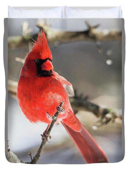 Perching Mister Cardinal Duvet Cover