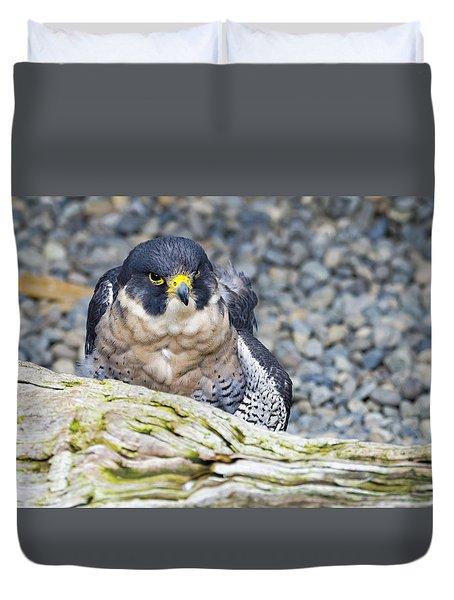 Peregrine Falcon 1 Duvet Cover