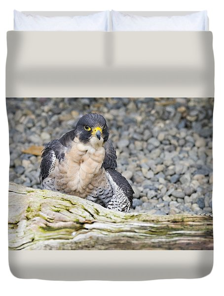 Peregrine Falcon 2 Duvet Cover