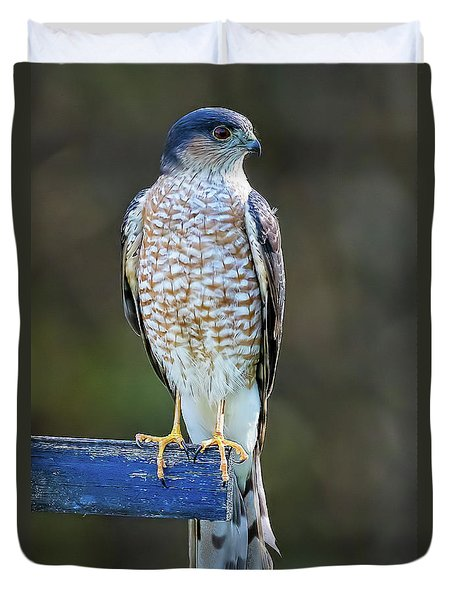 Sharp-shinned Hawk Duvet Cover