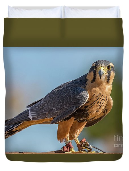 Peregrine Falcon Wildlife Art By Kaylyn Franks Duvet Cover
