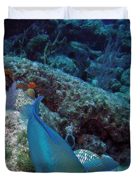 Perky Parrotfish Duvet Cover by Kimberly Mohlenhoff