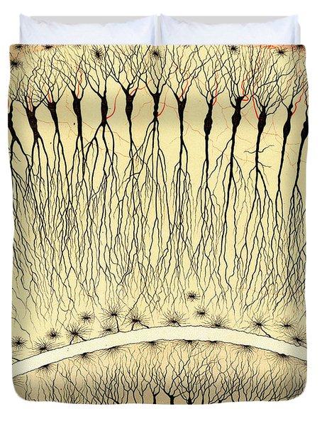 Pes Hipocampi Major Santiago Ramon Y Cajal Duvet Cover