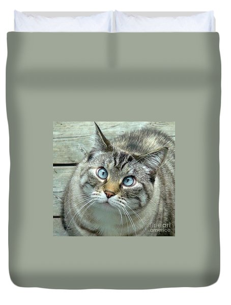 Duvet Cover featuring the photograph Pet Portrait - Lily The Cat Four by Laura  Wong-Rose
