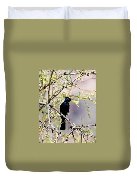 Phainopepla Black Cardinal Duvet Cover