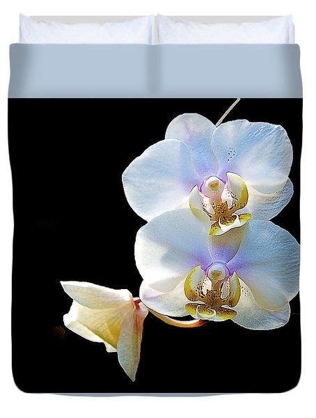 Phalaenopsis Culican #1 Nobby's Amy Shin Hua Duvet Cover