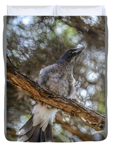 Pied Currawong Chick 1 Duvet Cover