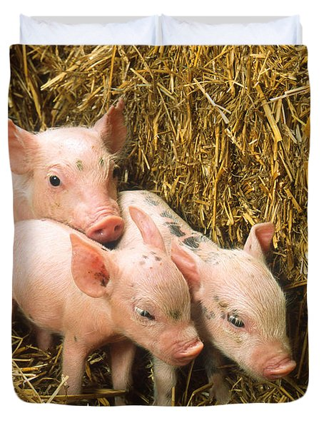 Piglets Duvet Cover by Science Source