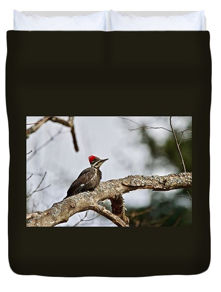 Duvet Cover featuring the photograph pileated Woodpecker 1068  by Michael Peychich
