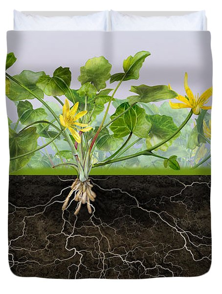 Pilewort Or Lesser Celandine Ranunculus Ficaria - Root System -  Duvet Cover