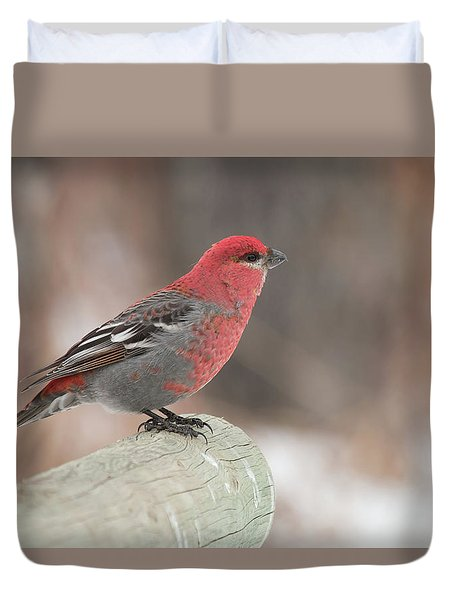 Pine Grosbeak Duvet Cover
