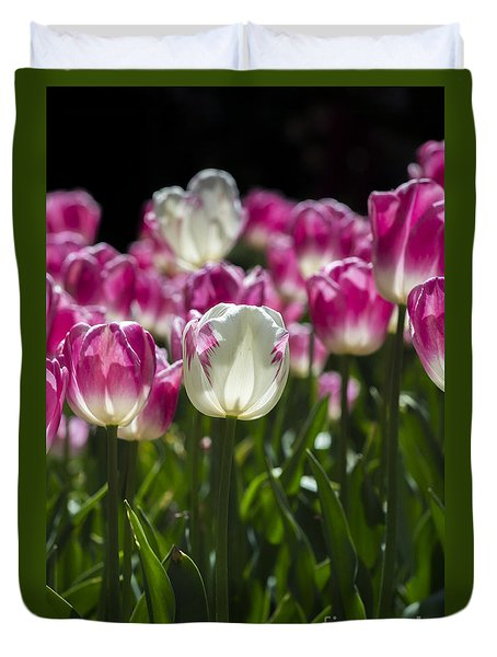 Duvet Cover featuring the photograph Pink And White Tulips by Angela DeFrias