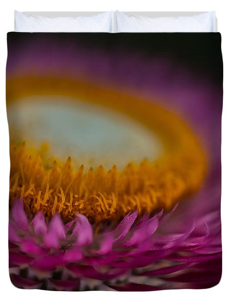 Pink And Yellow Strawflower Close-up Duvet Cover