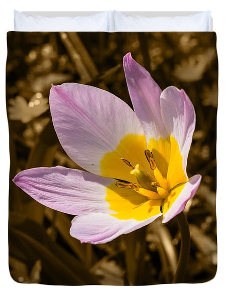 Pink And Yellow Tulip On Sepia Background Duvet Cover