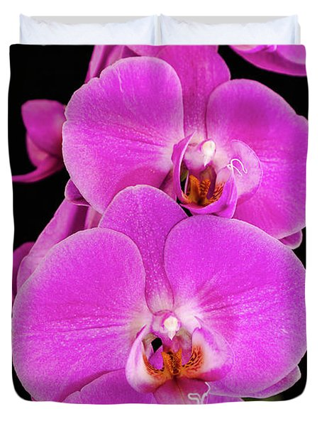 Pink Orchid Against A Black Background Duvet Cover