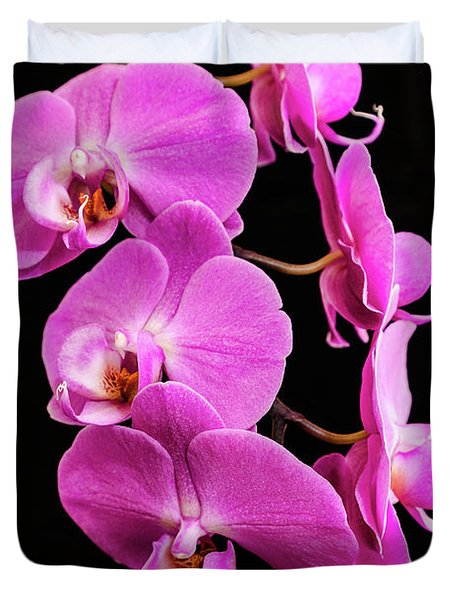 Pink Orchid With Black Background Duvet Cover