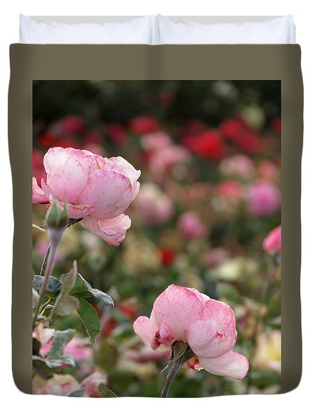 Duvet Cover featuring the photograph Pink Roses by Laurel Powell