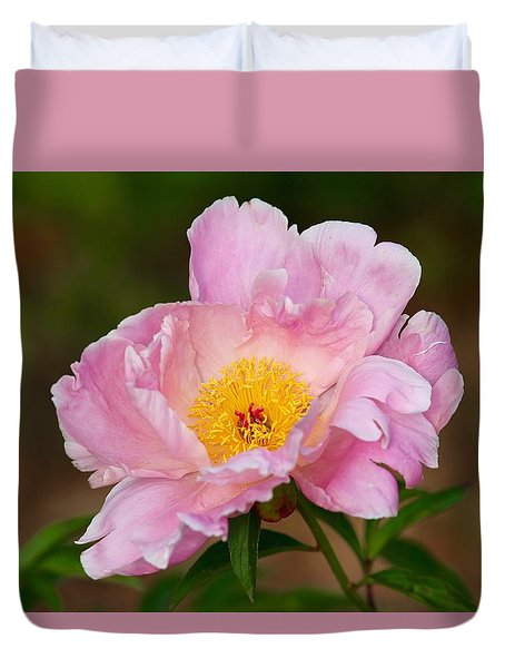Duvet Cover featuring the photograph Pink Toned Peony by Lynn Hopwood