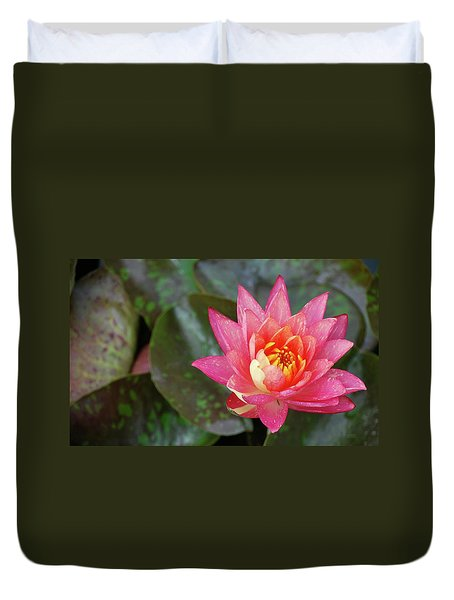 Duvet Cover featuring the photograph Pink Water Lily Beauty by Amee Cave