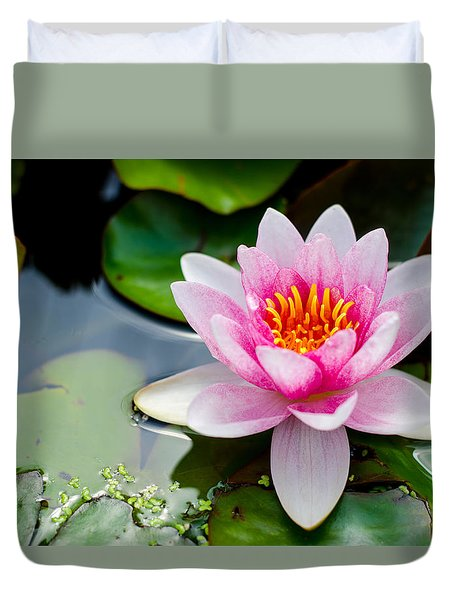 Pink Waterlily Duvet Cover by Daniel Precht
