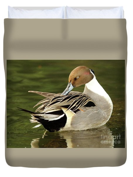 Duvet Cover featuring the photograph Pintail Drake Grooming by Max Allen