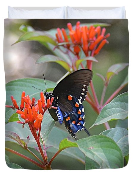 Pipevine Swallowtail Butterfly On Firebush Duvet Cover
