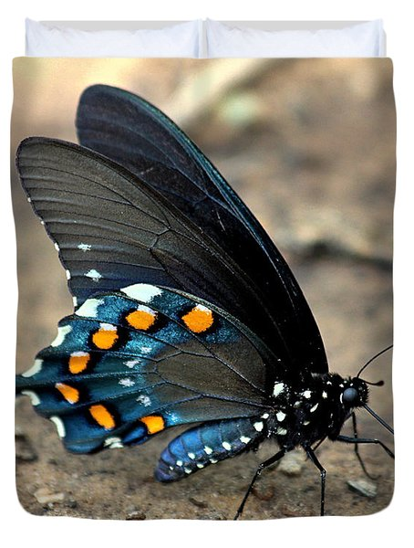 Pipevine Swallowtail Close-up Duvet Cover