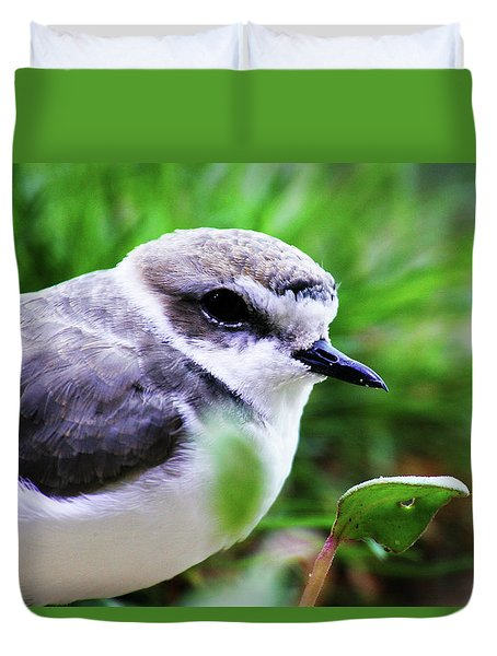 Duvet Cover featuring the photograph Piping Plover by Anthony Jones