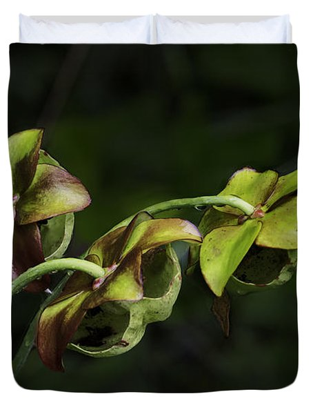Pitcher Plant 13 Duvet Cover