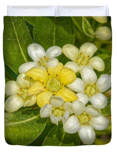 Pittosporum Flowers Duvet Cover