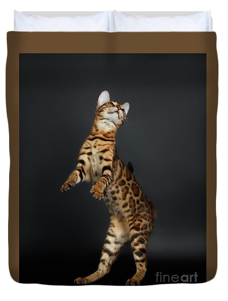 Playful Female Bengal Cat Stands On Rear Legs Duvet Cover by Sergey Taran