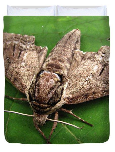 Plebeian Sphinx Moth Duvet Cover