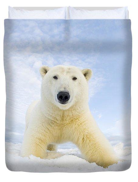 Polar Bear  Ursus Maritimus , Curious Duvet Cover by Steven Kazlowski