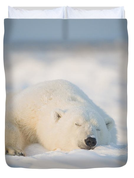 Polar Bear  Ursus Maritimus , Young Duvet Cover by Steven Kazlowski