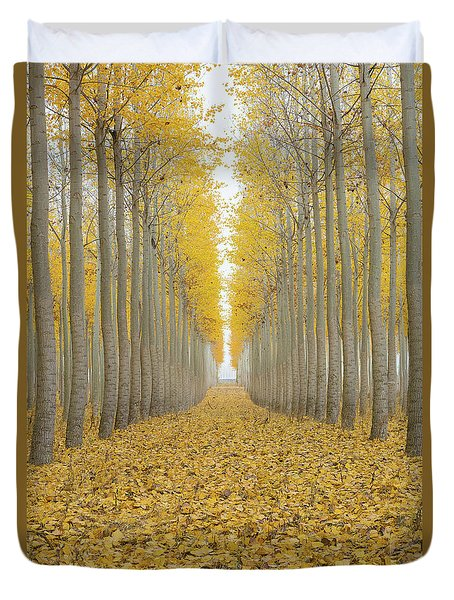 Poplar Tree Farm One Foggy Morning In Fall Season Duvet Cover