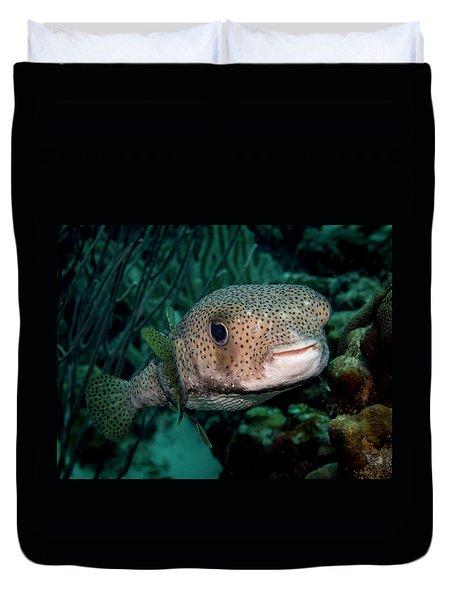 Porcupine Fish Duvet Cover